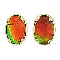 Ladies' Ammolite Stud Earrings 14K Yellow Gold